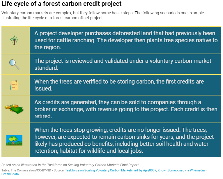 Life cycle of a forest carbon credit project